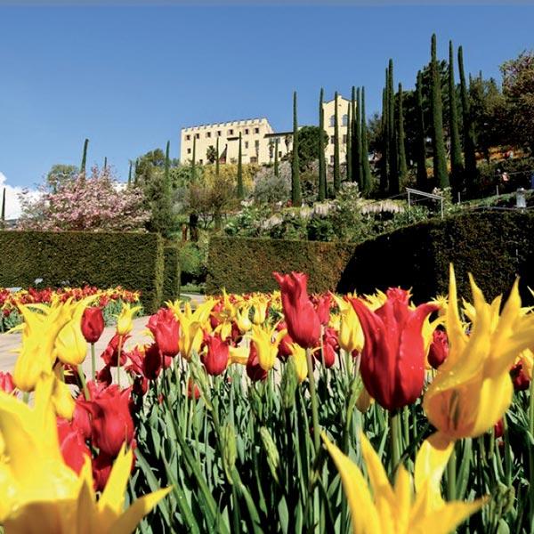 fioritura alpe di siusi giardino villa