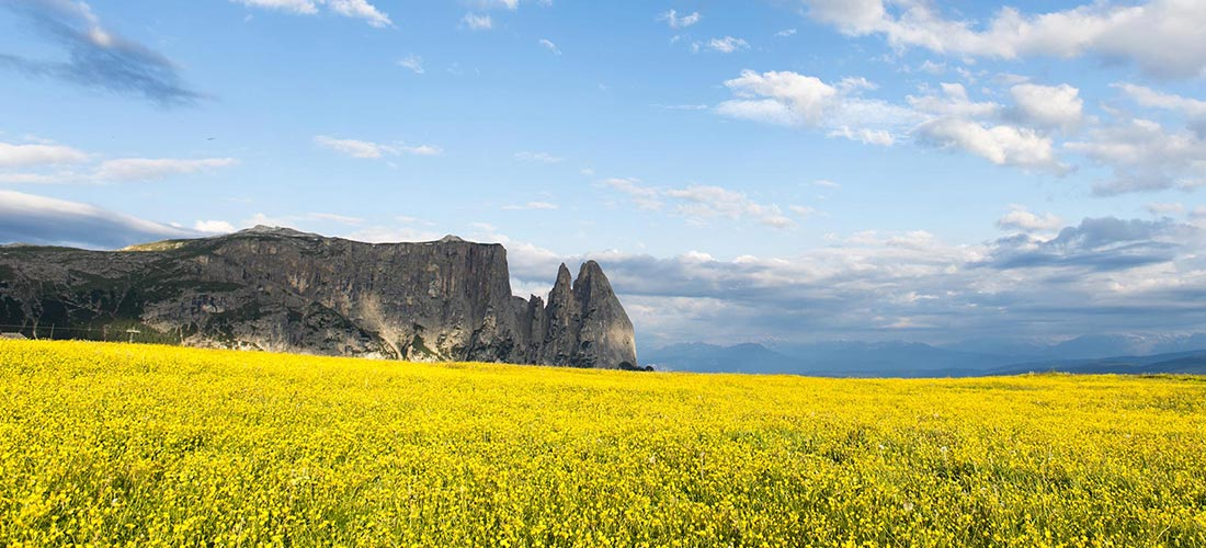 panorama fioritura alpe siusi sfondo sciliar